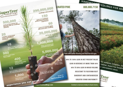supertreeseedlings advertisement graphic design