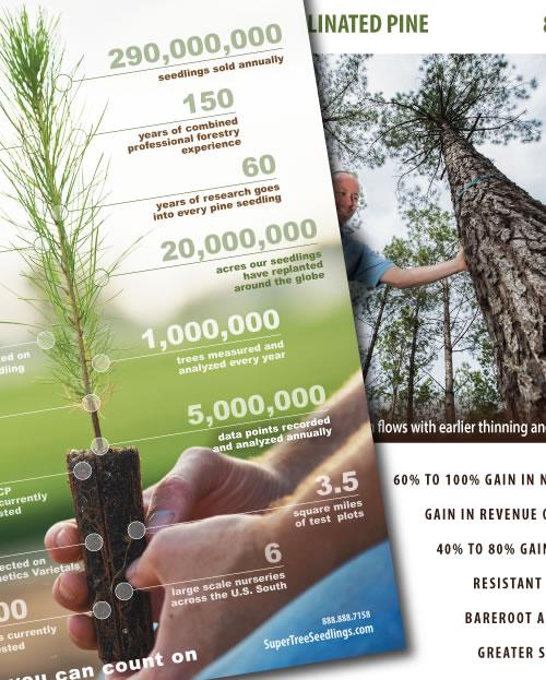 supertree seedlings branding graphic design